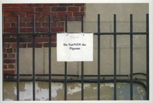Do not FUCK the pigeons