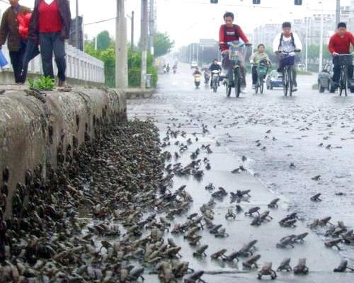 Тысячи жаб