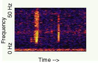 Странные звуки - Bloop